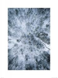 Zaśnieżony las - reprodukcja