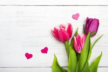 Fototapeta tulipan 2162