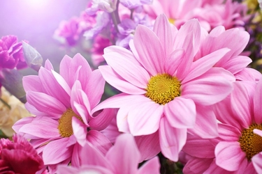 Fototapeta kwiaty 2216
