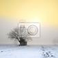 Fototapeta piękny zimowy krajobraz o zachodzie słońca z mgłą i śniegiem
