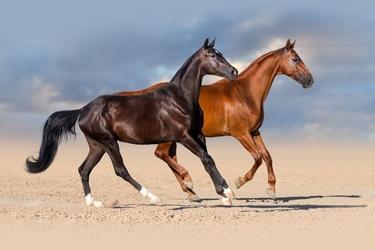 Fototapeta konie 1704