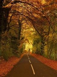 Leśna droga 153 fototapeta