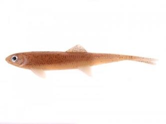 Guma dam effzett - split tail 90mm - milkshake  sb8