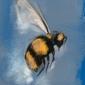 Pszczoła - plakat