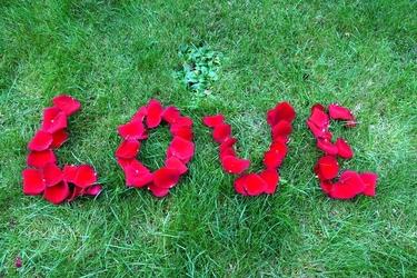 Fototapeta napis love z płatków róży fp 576
