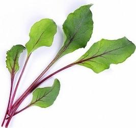 Wkład nasienny Lingot warzywa liściowe burak ćwikłowy