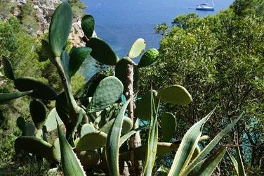 Fototapeta kaktusy na wybrzeżu FP 299