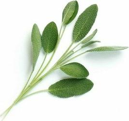 Wkład nasienny Lingot zioła nietypowe szałwia