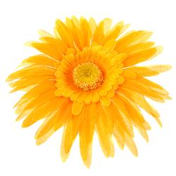 Gerbera wyrobowa 15 cm - żółty - żółty