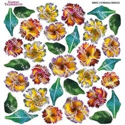 Termofolia do Sospeso - Primula Sirocco - PRW