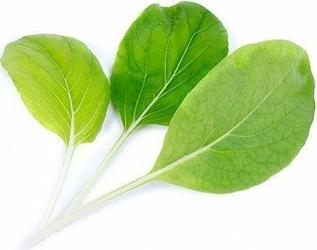 Wkład nasienny Lingot warzywa liściowe kapusta Bok Choy