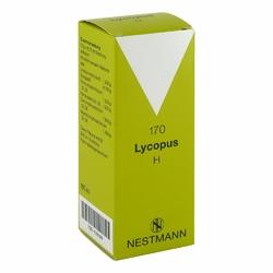 Lycopus H Nr. 170 Tropfen