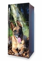 foto naklejka na lodówkę pies spacer po lesie P5