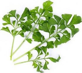 Wkład nasienny Lingot warzywa liściowe rukiew wodna