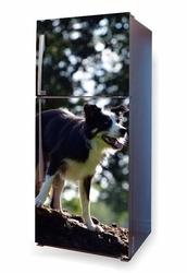 foto naklejka na lodówkę spacer z psem P7
