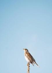 Tablica suchościeralna magnetyczna ptak 222