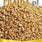 Galilea gold
