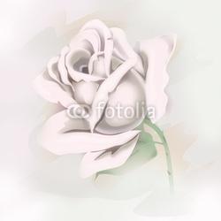 Obraz na płótnie canvas czteroczęściowy tetraptyk biała różyczka