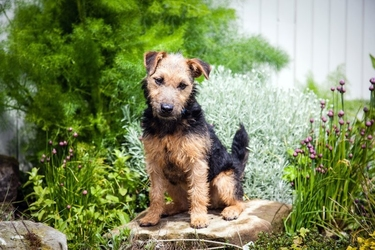Fototapeta pies siedzący w ogródku fp 2829