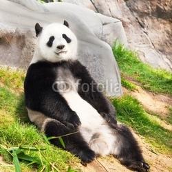 Naklejka samoprzylepna panda wielka