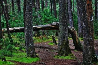 Fototapeta czarujące kolory lasu fp 1437