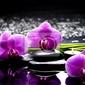 Obraz spa still life z zestawem różowa orchidea i refleksji kamienie