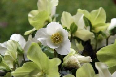 Fototapeta biały kwiat fp 445