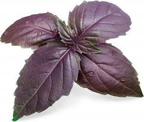 Wkład nasienny lingot zioła nietypowe bazylia purpurowa