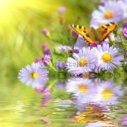 Obraz na płótnie canvas dwuczęściowy dyptyk dwa motyle na kwiaty z refleksji