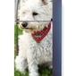 Foto naklejka na lodówkę pies p23