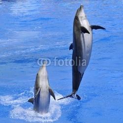 Fotoboard na płycie duże delfiny wyskakujące z wody