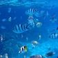 Troplikalne ryby - fototapeta