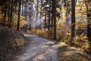 Fototapeta na ścianę jesienne drzewa przy leśnej ścieżce fp 3311