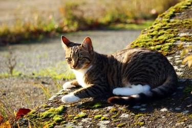 Fototapeta kot w słoncu fp 2582