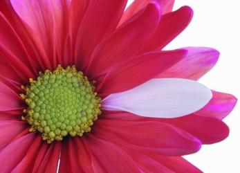 Kwiat - fototapeta