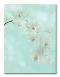 White orchid - obraz na płótnie