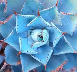 Plakat makro sukulenty na pustyni