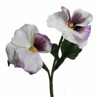 Bratek do florystyki - biały - biały