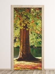 Fototapeta na drzwi pień drzewa fp 6233