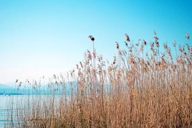 Fototapeta trawy na brzegu jeziora fp 1985