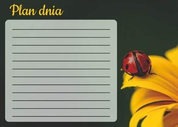 Tablica magnetyczna suchościeralna plan dnia biedronka 358