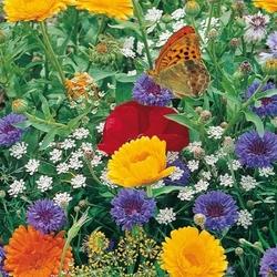 Kwiaty zwabiające motyle – łąka kwietna – kiepenkerl