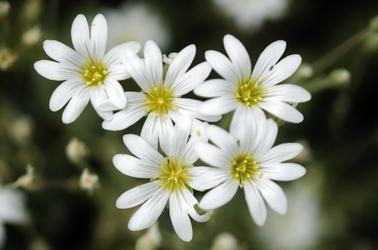 Fototapeta małe drobne kwiatki fp 304
