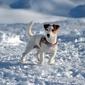 Fototapeta pies stojący w śniegu fp 2864