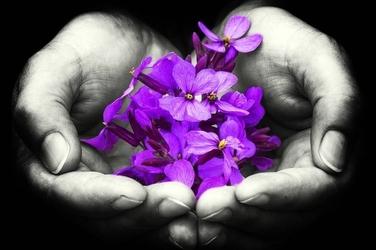 Fototapeta na ścianę fioletowe kwiaty trzymane w dłoniach fp 1137