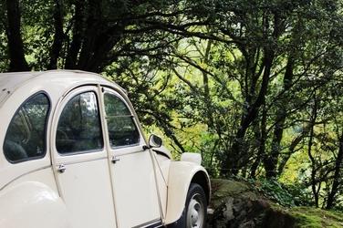 Fototapeta na ścianę białe auto na skraju lasu fp 2339