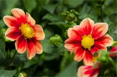 Fototapeta kwiaty 94