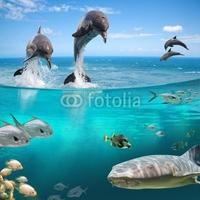 Obraz na płótnie canvas czteroczęściowy tetraptyk życie w wodzie