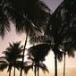 Obraz na płótnie canvas trzyczęściowy tryptyk palmy o zachodzie słońca w miami, florida, usa.