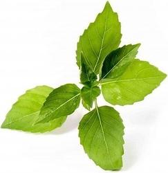 Wkład nasienny lingot zioła nietypowe bazylia cytrynowa